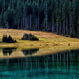 Odsev 1 by Bojan Kolman - Landscapes Forests