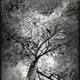 by Al Duke - Black & White Objects & Still Life