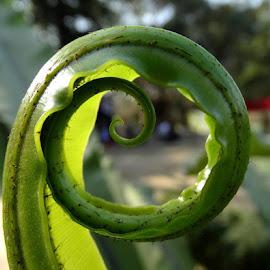 Curling up.... by Gautam Tarafder - Nature Up Close Leaves & Grasses