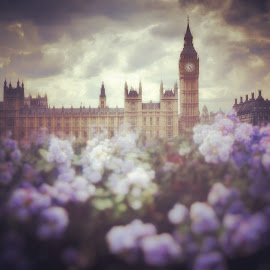 Vintage London by Jon Raffoul - Buildings & Architecture Public & Historical ( london, vintage, begben, westminster, flowers, bluebells )