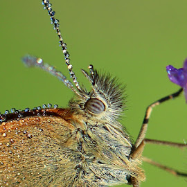 by РАЙНА СИНДЖИРЛИЕВА - Animals Insects & Spiders