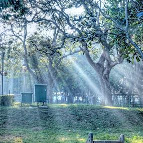 by Bharathkumar Hegde - City,  Street & Park  City Parks ( bangalore, park, india, karnataka, city )