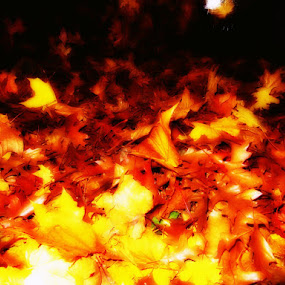 Midnight Fire by Che Dean - Nature Up Close Leaves & Grasses ( tree, autumn, trees, leaves )