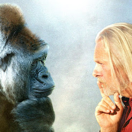 Face to Face by Bjørn Borge-Lunde - Digital Art Animals ( fantasy, person, gorilla, portrait, man )