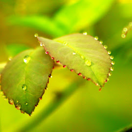 by Sultan Firaun - Nature Up Close Natural Waterdrops