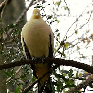 Special White Yellow Dove.jpg