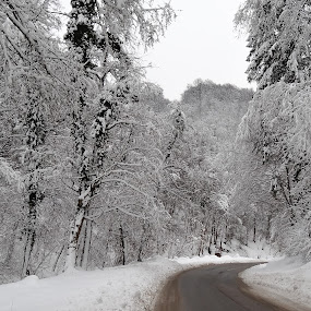 by Milan Z81 - Landscapes Forests ( winter, snow, white, forest, road )