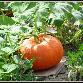 by Gisela Scott - Food & Drink Fruits & Vegetables
