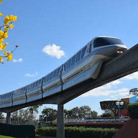 Monorail by Keith Heinly - City,  Street & Park  Amusement Parks ( monorail, tree, florida, epcot, disney )