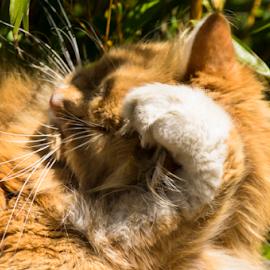 Garfield? by Wojciech Cieslak - Animals Other ( park, botanic garden, sheffiekd, day )
