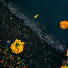Survive, at last. by Ren Ega - Nature Up Close Gardens & Produce ( film, marigold, lake, flowers )