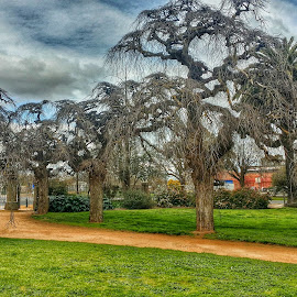 Trees in park by Feona Green-Puttock - Instagram & Mobile Android ( winter, park, trees )