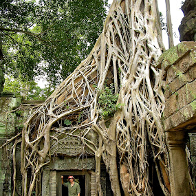 Angkor Tree by Dustin Wawryk - Nature Up Close Trees & Bushes