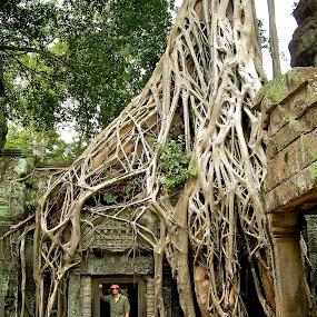 Angkor Tree by Dustin Wawryk - Nature Up Close Trees & Bushes