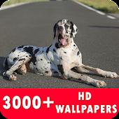 Great Dane Live Wallpapers HD APK for Ubuntu