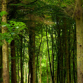 Trees and more trees by Luz UK - Nature Up Close Trees & Bushes ( nature, green, path, trees )