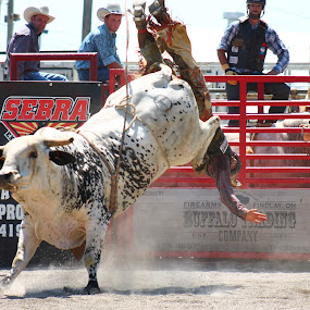 This Is Gonna Hurt by Brian  Shoemaker  - Sports & Fitness Rodeo/Bull Riding ( bull rider, cowboy, hurt, rodeo )