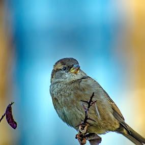 by Zaharescu Dragos - Animals Birds