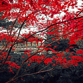 The scorching and the serene by Mehul Tembe - City,  Street & Park  City Parks ( red, leaves, city park )