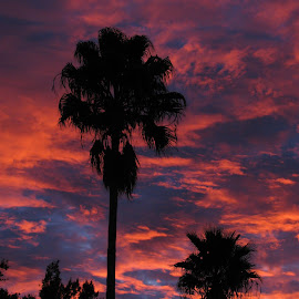 Palms In The Morning by Carol Lavin - Novices Only Landscapes