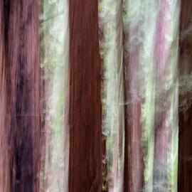 Nisene Marks One-1 by Matt Folsom - Abstract Light Painting ( redwoods, nisene marks, hike )