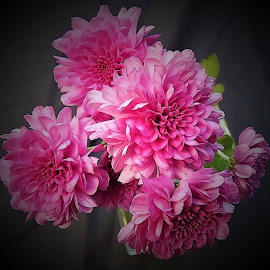 Chrysanthemums  by Mary Gallo - Flowers Flower Gardens ( fall flowers, nature, garden flowers, chrysanthemums, flowers,  )