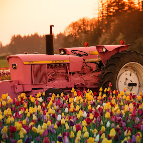 Tractor in the tulip field by Ivan Johnson - Flowers Flower Gardens (  )