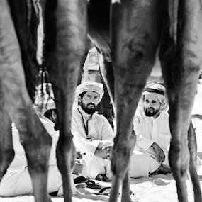 Seen through... by Viktoryia Vinnikava - People Street & Candids ( camel, back, travel, people,  )