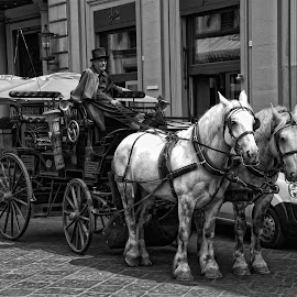 Your Carriage Awaits by Keith Sutherland - Transportation Other ( florence, b&w, horses, carriage, horse drawn,  )
