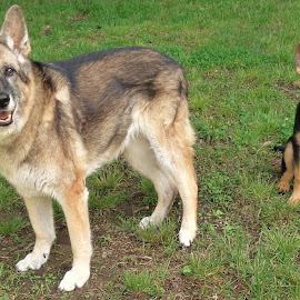 1 by Brenda Samella - Animals - Dogs Playing