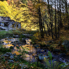 Ruins by Neli Dan - Landscapes Forests ( leaves, stream, ruins, autumn, time )