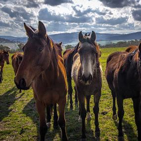 Rydal horses by David Spillane - Animals Horses ( countryside, animals, paddock, horses, grass, green, sun rays, rural )