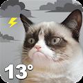 Free Grumpy Cat Weather APK for Windows 8