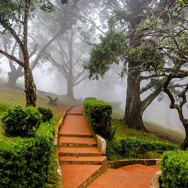 Let us play by Sanjeev Goyal - City,  Street & Park  City Parks ( foggy, park, fog, trees, morning, city park )