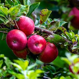 by Stanley P. - Food & Drink Fruits & Vegetables (  )