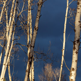 Stormy night by Giselle Pierce - Nature Up Close Trees & Bushes ( white, trees, storm )