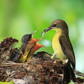 by Prachit Punyapor - Animals Birds