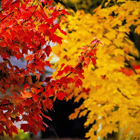 Two colors by Zoran Mrđanov - Nature Up Close Trees & Bushes (  )