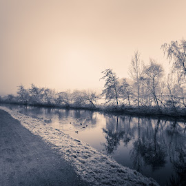Long de sambre by Sophie Carry - Landscapes Weather ( water, d7200, way, north, landscape, sambre, chemin, nature, tree, trees, france, nikon, natural, tokina )