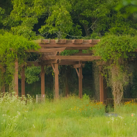 Pergola by Jennifer  Loper  - Buildings & Architecture Other Exteriors ( pergola, tall grass, flowers, bull shoals, arkansas, state park )