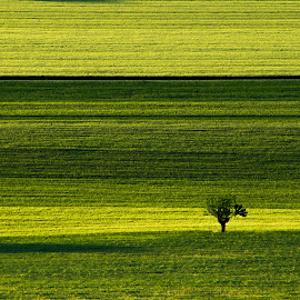 Fields by Emanuele Zallocco - Landscapes Prairies, Meadows & Fields (  )