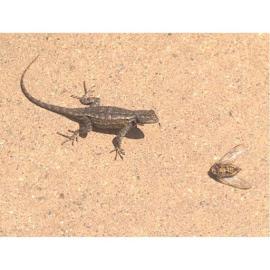 by Heidi George - Animals Amphibians