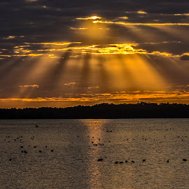 Preparing for the evening by Joe Saladino - Landscapes Sunsets & Sunrises ( clouds, water, bird, roosting birds, sunset )