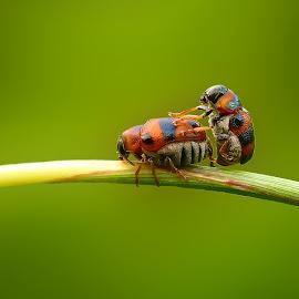 happy by Rama Smookerr - Animals Insects & Spiders ( macro art, tgif macro, macro nusantara, macro, macrophotography, bugs are us, macro insects, macro shot, 1001 macro,  )