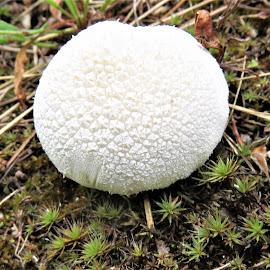 by Denise O'Hern - Nature Up Close Mushrooms & Fungi