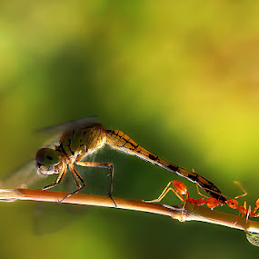 Small predator by Adhii Motorku - Animals Insects & Spiders