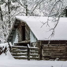 Old Barn Winter by Dusty Rayburn - Buildings & Architecture Other Exteriors ( winter, barn, snow, buildings, country,  )