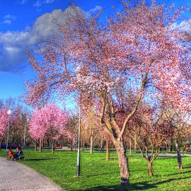 Spring by Tihomir Beller - City,  Street & Park  City Parks