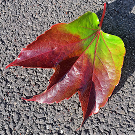 Leaf by Dobrin Anca - Instagram & Mobile iPhone ( green, street, brittany, leaf, city )