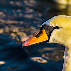 Swan by Bjørn Bjerkhaug - Digital Art Animals